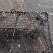 川蟹漁 秋 やっと初漁