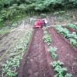 ジャガイモの土寄せをしました。