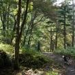 色づき始めの森を散策~♪