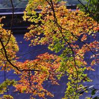 晩秋の紅葉写真 その2