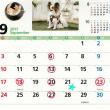 9月の診療&トリミングは、暦通りです。