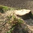 岡崎の古墳見学