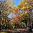 秋の富良野・中富良野森林公園
