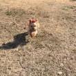 憧れの飛行犬