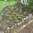 クレマチスの丘の売店で買ってきた苗を鉢増しして。・・・そして今日の庭。