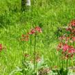 6月・・・赤石山系最北端・・・入笠山・・・山野草の宝庫・・・入笠湿原を歩く