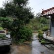今日から菊の親株を植えているハウスのイオウ燻蒸をします。