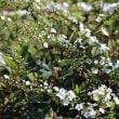 福岡城址の春の花