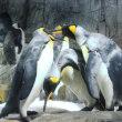 キングペンギンBOYS