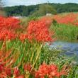 秋の風情 〈垂木川中流のヒガンバナ〉