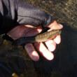 減水に転じる~厳しい釣り