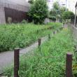 東京自宅周辺の除草に汗を流しました。