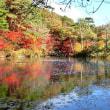 神戸森林植物園の紅葉が綺麗 2017.11.11