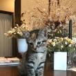 子猫の里親募集‼️ 岡山市です。