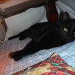 クロ猫クロ 33ヶ月目 寒さでか運動不足