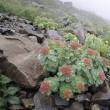 仙丈ケ岳登山(南アルプス)