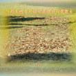 『 天も地も不仁不条理木の葉散る 』筑紫風575交心ztk0104