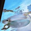 サンシャイン水族館 #7 ~ ペリカン ~