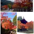 高野山、紅葉