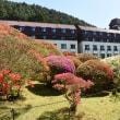 小田急山のホテルの庭園その2     投稿者:佐渡の翼