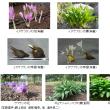 自然毒のリスクプロファイル:高等植物:イヌサフラン