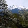 信州の春の訪れ