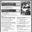 第8回『じないまち雛めぐり』開催!