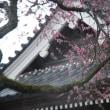 雨:弘道館