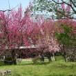 「桜・その他」/浜離宮恩賜庭園(2019春)
