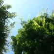 青空に咲く緑