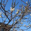「春は名のみぞ」のさいたま市