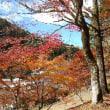稲武の大井平公園の紅葉・2018