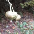 11.11観察会@金剛山の植物に親しむ会