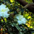 永和から東山植物園へ、...花編