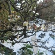 おんめさまの雪景色