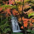 徳川園の紅葉 ①