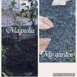 マグノリア
