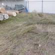 電柱置き場除草