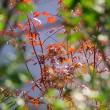 庭の秋・光る滴