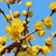 春を前に花盛りってかぁ?