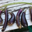 今日はアスパラガス&茄子収穫!