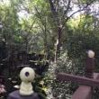 カンボジア ベンメリア遺跡観光 プライベートツアーで 行きましょうか!?