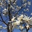 春の訪れ 🌸 2018年3月16日