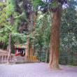 安良神社の杉