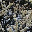 弥生三月 旅日和 〈京都にて〉
