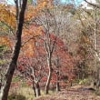 タカドヤ湿地の紅葉・2018