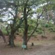 古代ブログ 74 浜松の遺跡・古墳・地名・寺社 42 東区の三方原学園内「千人塚古墳」<再掲>