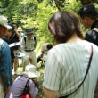 6/16 熊野古道自然学校「コケの観察会~蘚苔類って何?」へ