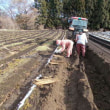晴耕雨読日記 平成29年12月9日 金曜日 長芋掘りが始まりました