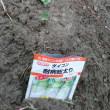 野菜苗と種まき